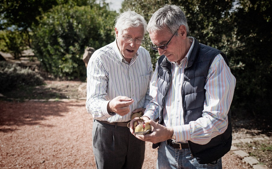 Rodolfo y Juan Ramón recogen los frutos de los diversos arboles frutales || Rodolfo and Juan Ramon collect the fruits form diverse fruit trees