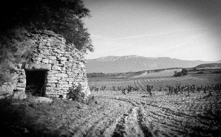Guardaviñas y cepas viejas cerca de Carravalseca || Vineyard shelter and old vines near Carravalseca